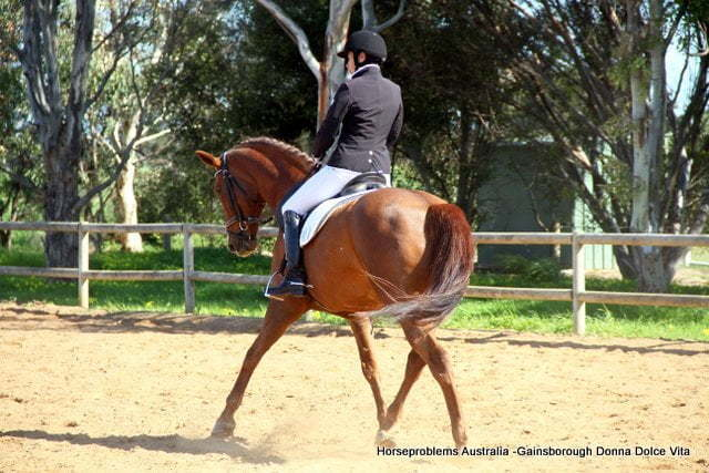 Overcoming Stiffness in the Dressage Horse