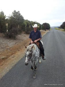 Peer Review - South Australian Mounted Police Horse Problems Australia