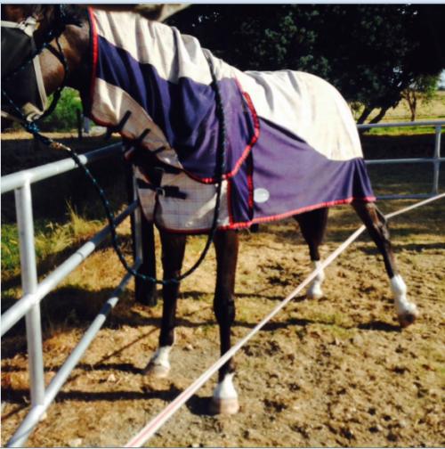 Back Leg Strap Horse Problems Australia
