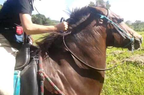 beauty and gem under saddle