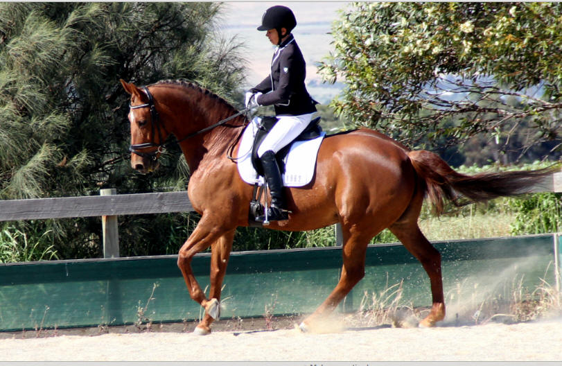 Muscle Development of the Dressage Horse