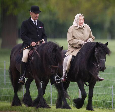 British horse