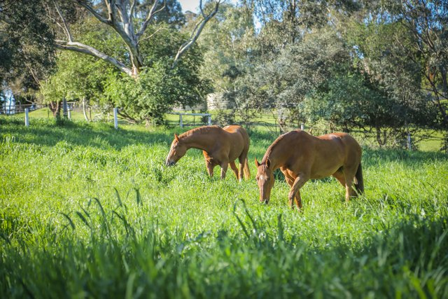 , Pasture Management for the Horse