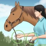 Leading-Your-Horse-to-Ulcers-e1517627493896-150x150