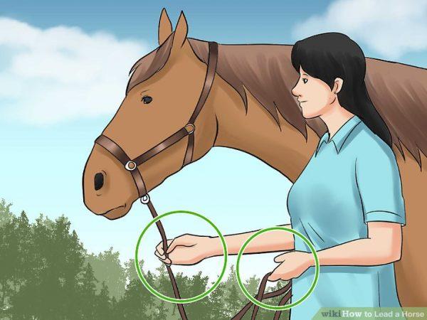 Dangerous Horse Leading style