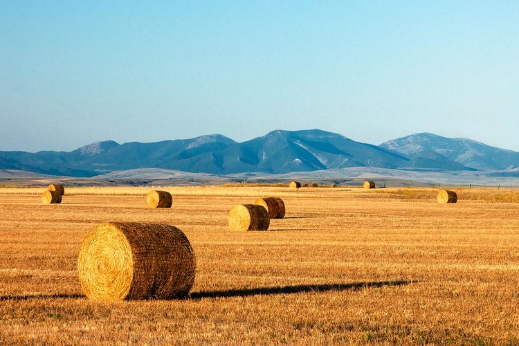 Buying Meadow Hay is highly dangerous to Your Property