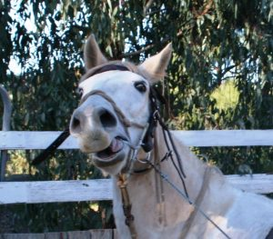 Horse-046-1-300x263