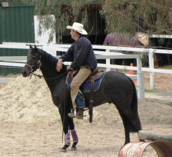 Horseproblems Australia
