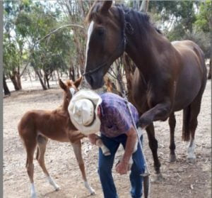 Halter Start your Foal early!!