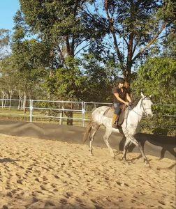 FEEDBACK Horse Problems Australia