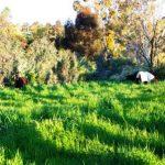 Agistgrasspaddock-150x150