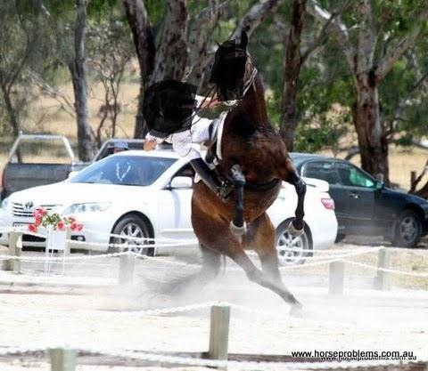 Peer Review - Evidence based Horse Training Horse Problems Australia