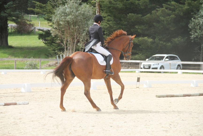 TRAINING-DRESSAGE_1