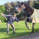 Leg Restraints training horse