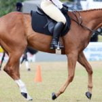 Horse Purchase assessment Online