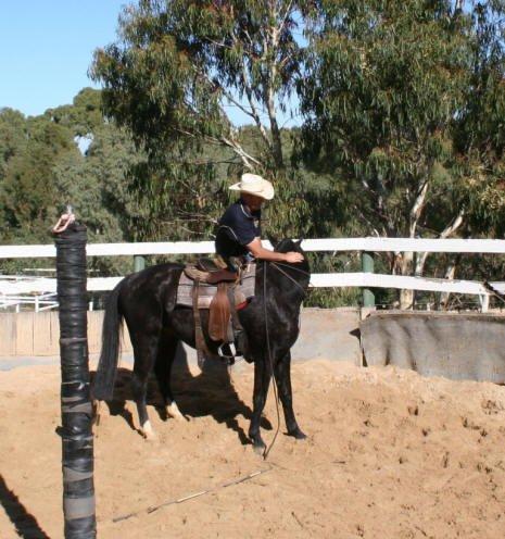 Horse-005
