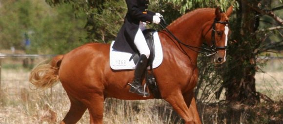 Problem Horse Dressage Videos