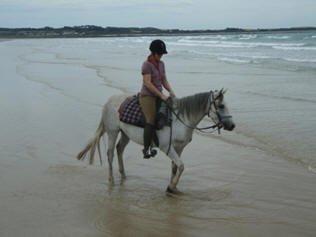 horse_8-1