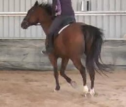 Dressage Coaching Online