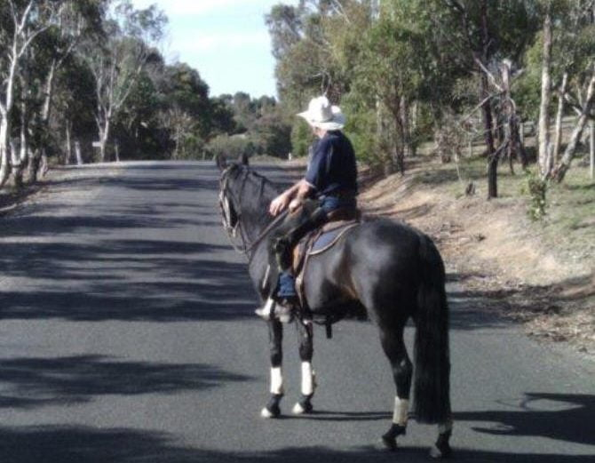 Extended English Bridle Reins