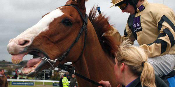 race-horse-bit