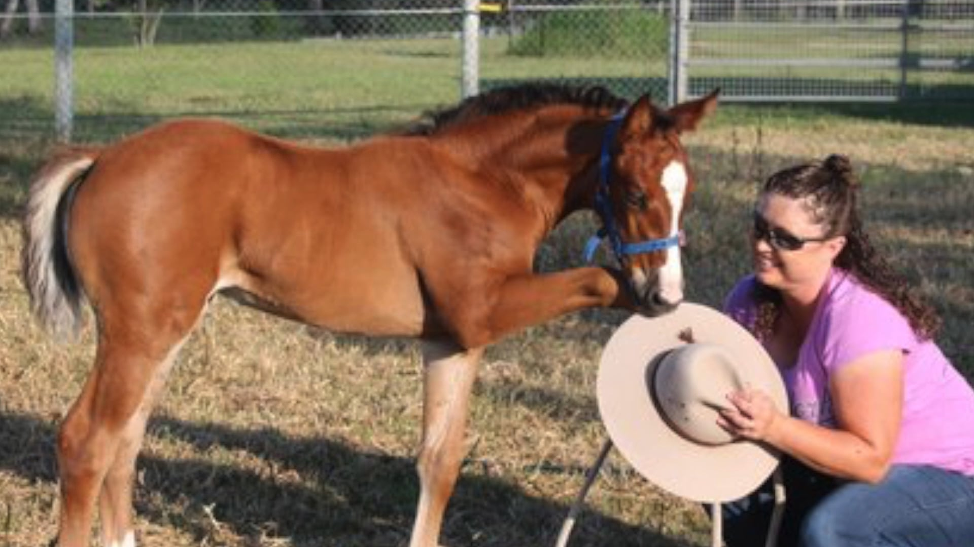 Halter-Starting-the-Foal
