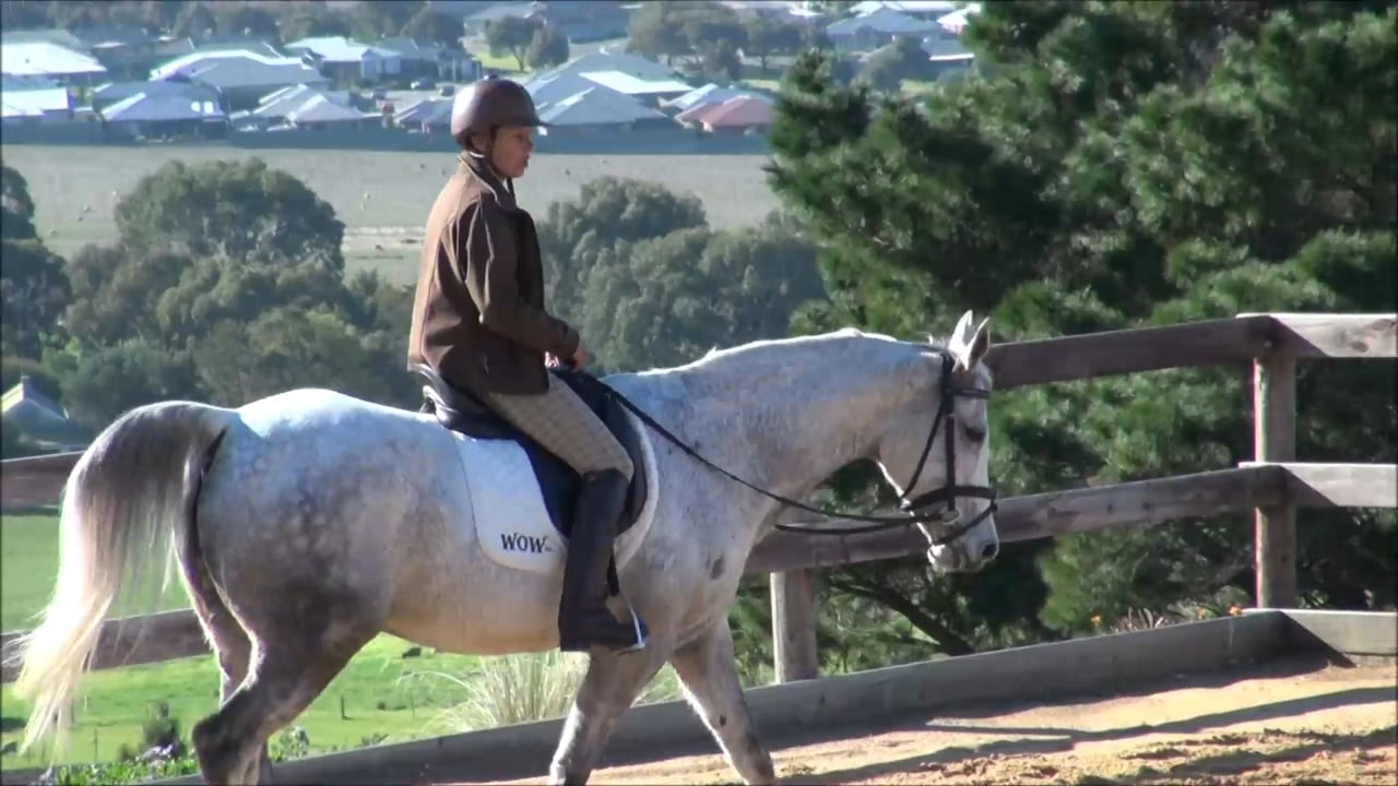 Transitions-with-the-Dressage-Horse