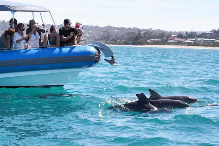 dolphinsandboat