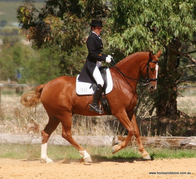 dressage horse muscle development