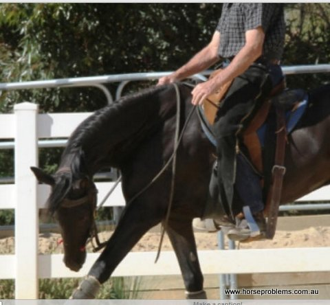Horseproblems Australia Blog 4th Sept, 2020