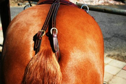 Cruppers for Horse Saddles