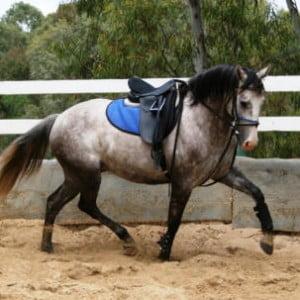 Horseproblems Running Reins System