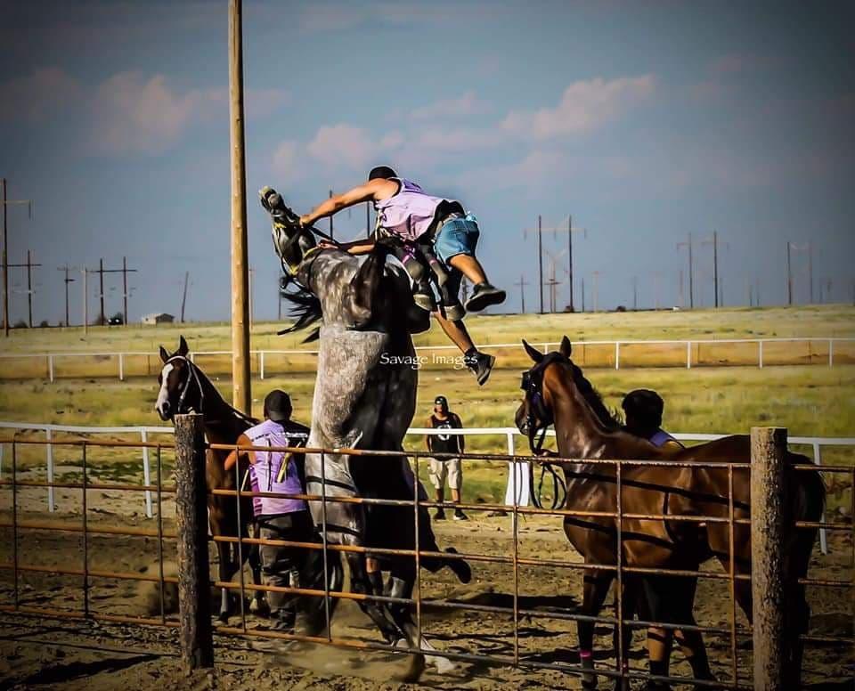 horseproblems australia blog 20/6/21